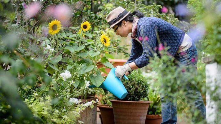 tips merawat tanaman hias di rumah