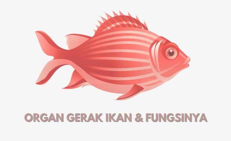 nama organ gerak ikan