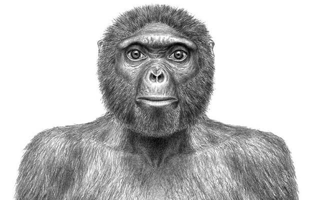 Manusia purba (Ardipithecus Ramidus)