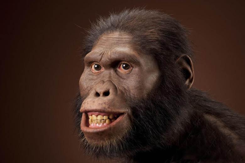 Jenis manusia purba Australopithecus Africanus