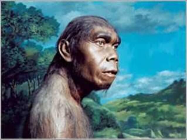 Jenis manusia purba Meganthropus Paleojavanicus