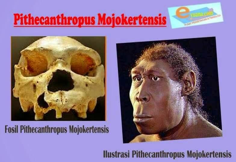 Jenis manusia purba Pithecanthropus Mojokertensis
