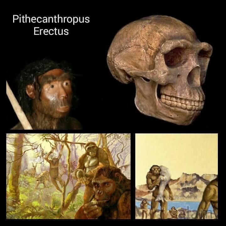 Jenis manusia purba Pithecanthropus Erectus